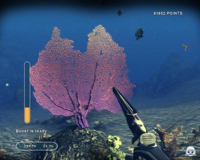 Korallen wie diese Riesen-Gorgonie sind ansprechend dargestellt.